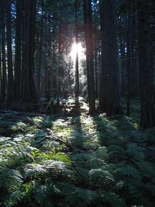 As the light begins to shine through the thick forest, one can appreciate the beautiful landscape all around.